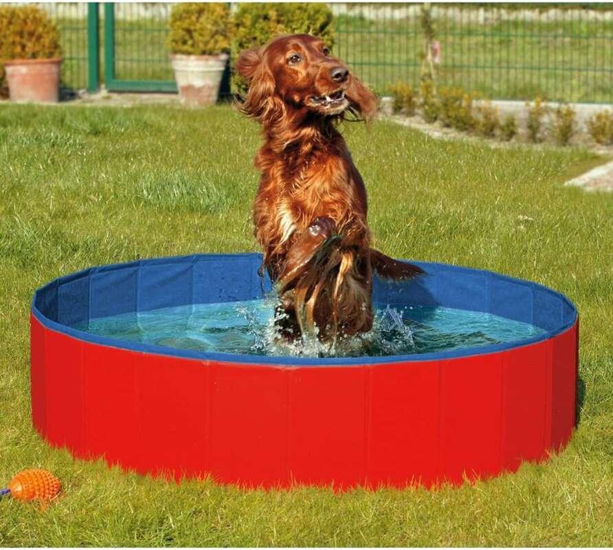 piscinas para perros en Madrid
